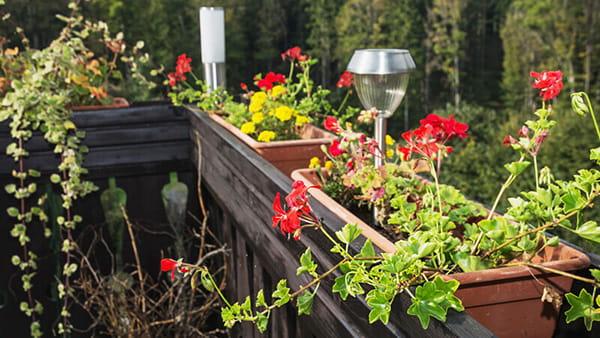 4 mẹo làm vườn hoa trên ban công nhỏ